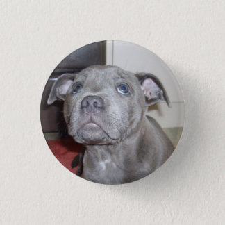 Staffy Puppy Love Eyes, Button Badge.