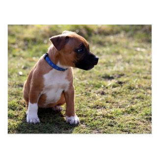 Staffy Puppy Postcard