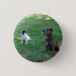 Staffy Treat Time, Small Button Badge.
