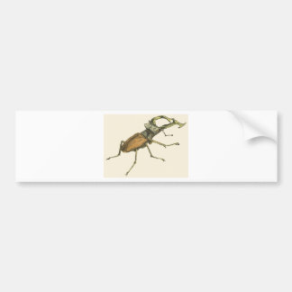 Stag Beetle Bumper Sticker