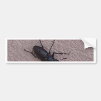 stag beetle bumper sticker