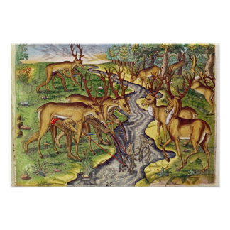 Stag Hunt, from 'Brevis Narratio' Poster