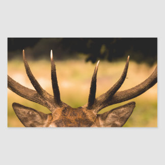 stag of richmond park