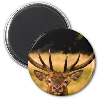 stag of richmond park 2 inch round magnet