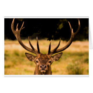 stag of richmond park card