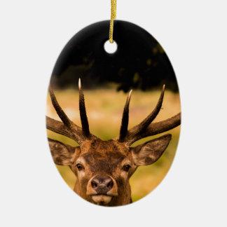 stag of richmond park ceramic ornament