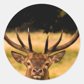 stag of richmond park classic round sticker