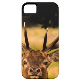 stag of richmond park iPhone 5 covers