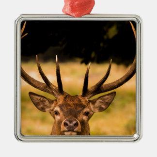 stag of richmond park metal ornament