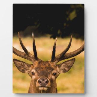 stag of richmond park plaque