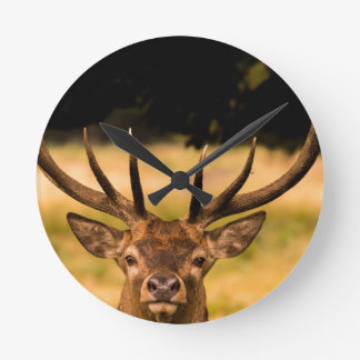 stag of richmond park round clock