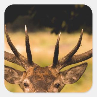 stag of richmond park square sticker