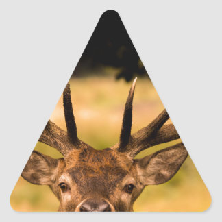 stag of richmond park triangle sticker