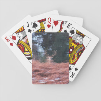 Stag on a hill playing cards