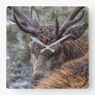 stag photograph clock