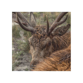 Stag photograph wood wall art