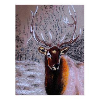 stag - postcard