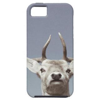 Stag prints stay Deer antlers Antlers iPhone 5 Cases