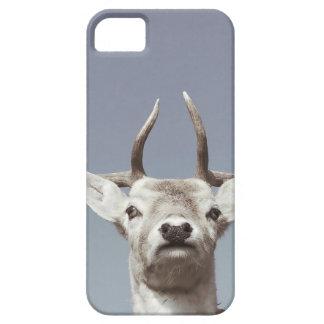 Stag prints stay Deer antlers Antlers iPhone 5 Cover