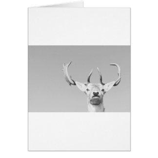 Stag prints stay Deer Card