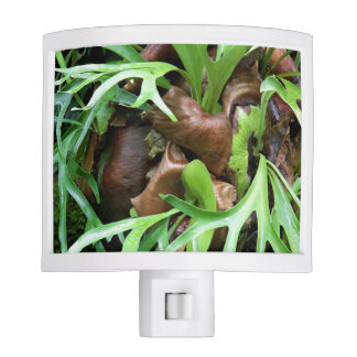 Staghorn Fern Night Light