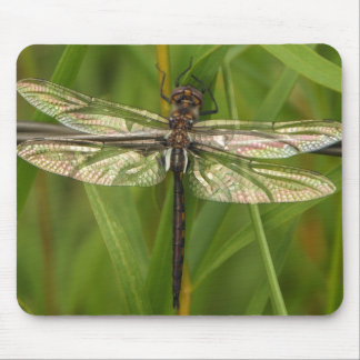 Stained Glass Wings Dragonfly Mousepad