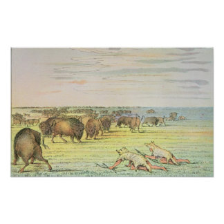 Stalking buffalo print