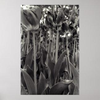 Stalking Tulips Poster