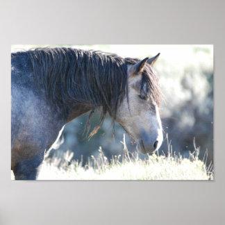 Stallion Ranger - Theodore Roosevelt National Park Poster