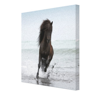 Stallion Running On Beach | North Atlantic Canvas Print