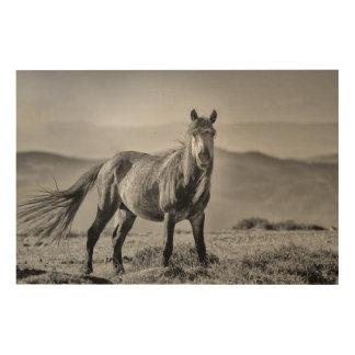 Stallion Wood Canvases