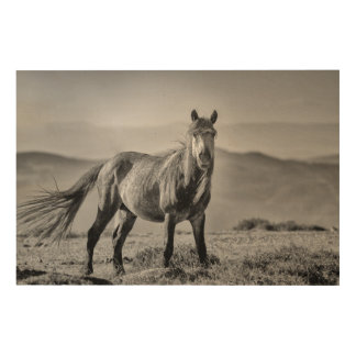 Stallion Wood Wall Art
