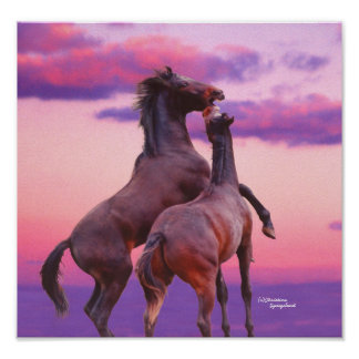 Stallions Play at Sunrise Poster