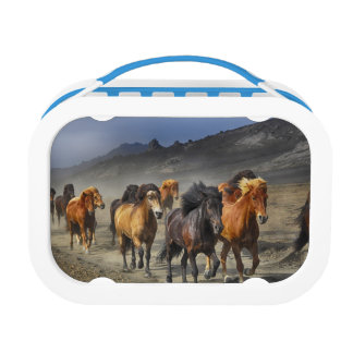 Stampeding Horses Lunch Box