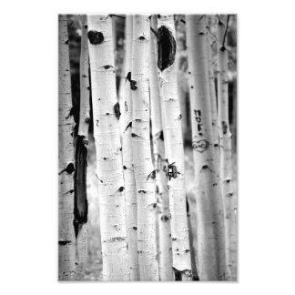 Stand tall Aspen's Photo Print