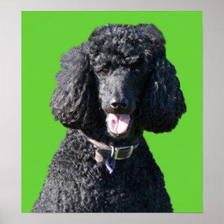Standard Poodle dog black photo poster, print