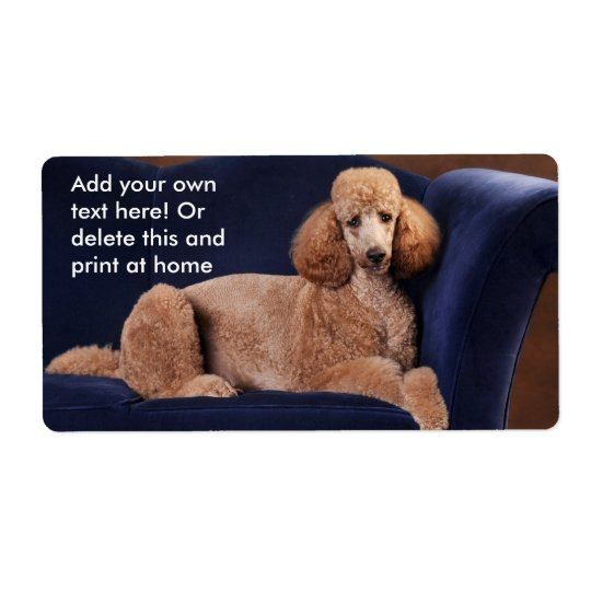 Standard Poodle on Blue Velvet Loveseat Shipping Label