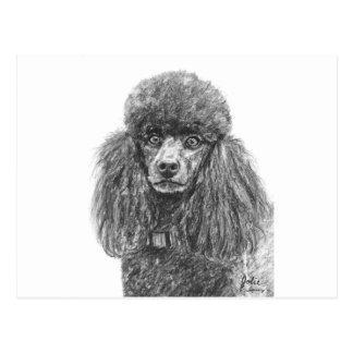 Standard Poodle Sketch Postcard