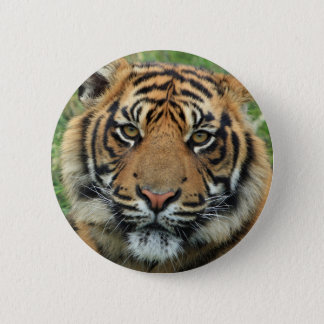 Standard tiger: 5.7 cm round Button