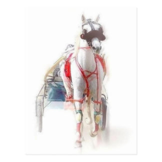 Standardbred Horse Postcard