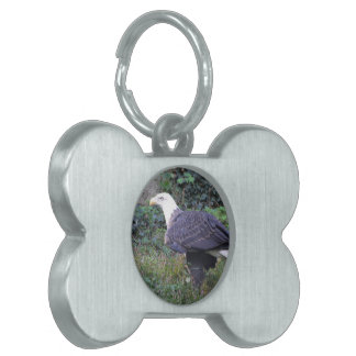 Standing American Bald Eagle Pet ID Tags
