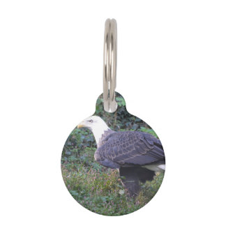 Standing American Bald Eagle Pet Name Tag