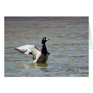 Standing Bear Lake Single Mallard Card