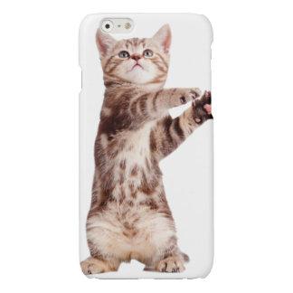 Standing cat - kitty - pet - feline - pet cat