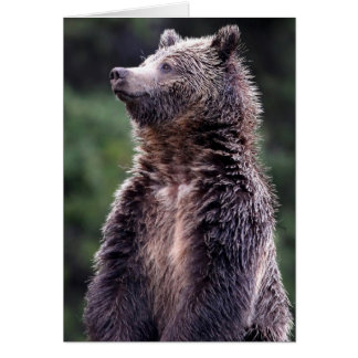 Standing Grizzly Bear Card