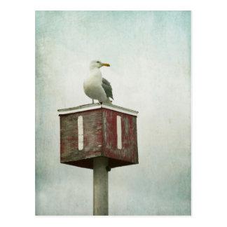 Standing Guard Postcard