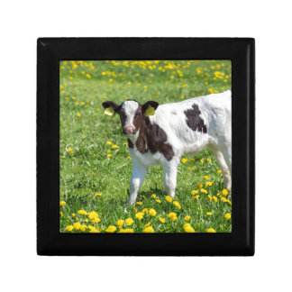 Standing newborn calf in meadow with yellow dandel gift box