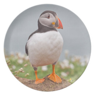 Standing Proudly Puffin Plate
