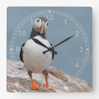 Standing Puffin Square Wall Clock