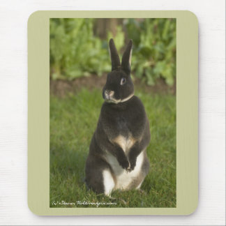 Standing Rex Rabbit Mouse Pad